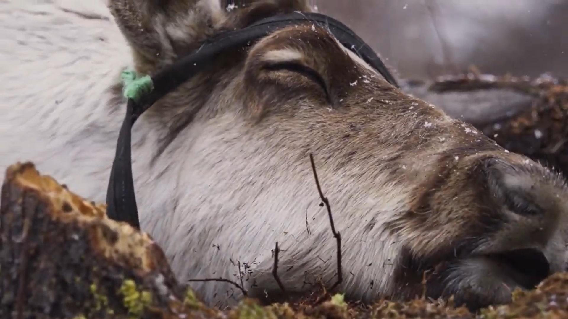 Banff Mountain Film Festival Trailer